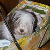 "Havanese  "" Cupcake"" taking a ride in the baby stroller"